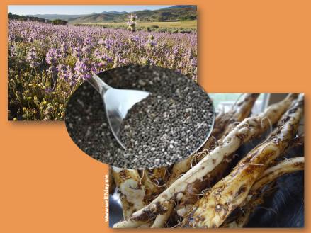 Chia Seeds & Dandelion Root